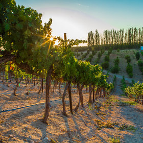 Food & Wine: America's Next Must-Visit Wine Region Is Where You'd Least Expect It