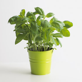 Food & Wine: Why Basil Is So Good for You—Plus 14 Ways to Use More of It All Summer Long