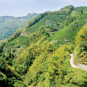 Food & Wine: Eating Weng Yao Ji in Nantou Province, Where the Roads Are Lined With Chicken