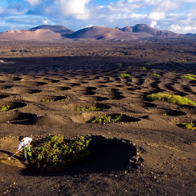 mkgalleryamp; Wine: Volcanic Wine 101: What You Need to Know About This Booming Category