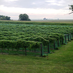 Food & Wine: Iowa Wine? Yes, And It's Kind of a Big Deal