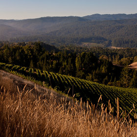 Food & Wine: 14 of the Anderson Valley's Most Delicious Wines