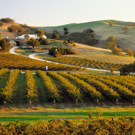 Food & Wine: A Wine Guide to Australia's Barossa and Eden Valleys: The Vineyards to Visit and Bottles to Buy