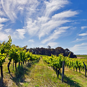 Food & Wine: Australia's Margaret River: The Vineyards to Visit and Bottles to Try