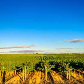 Food & Wine: A Guide to Australia's McLaren Vale Wine Region: The Vineyards to Visit and Best Bottles to Try