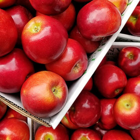 mkgalleryamp; Wine: Available This Fall: 3 New Apples That Will Rival the Reigning Honeycrisp
