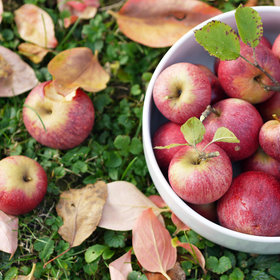 Food & Wine: 5 Places to Pick Apples and Drink Wine