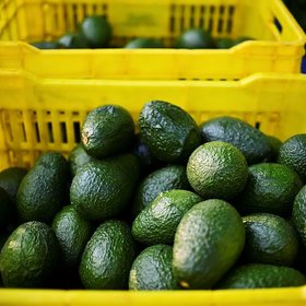Food & Wine: Is It Possible to Eat Too Much Avocado?