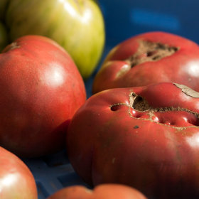 mkgalleryamp; Wine: Kroger Launches Ugly Produce Program