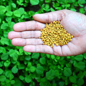 mkgalleryamp; Wine: How to Use Fenugreek in Everything, According to Chef Chintan Pandya