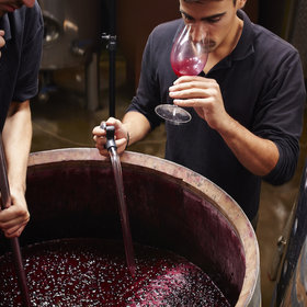 mkgalleryamp; Wine: How to Make Wine at Home
