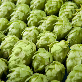 mkgalleryamp; Wine: This Hydroponic Hop Farm Wants to Offer Fresh Hops for Beer All Year Long