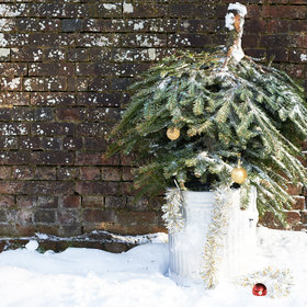 mkgalleryamp; Wine: This Brewery Is Turning Old Christmas Trees into a Beer