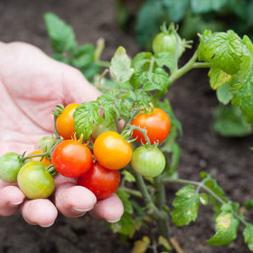 Food & Wine: How to Start Growing Organic Vegetables Yourself—It's Easy!