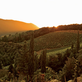 Food & Wine: Italy Unfiltered: A Week of Food and Drink With the Country's Best Natural Winemakers