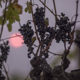 Food & Wine: Oregon Solidarity Wines Bails Out (And Bottles) Smoke-Tainted Grapes