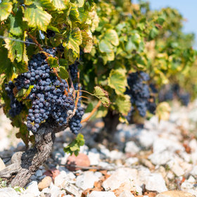 mkgalleryamp; Wine: Climate Change Could Affect How Chateauneuf-du-Pape Is Made