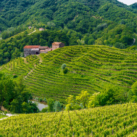 mkgalleryamp; Wine: This Key Prosecco-Producing Region Is Now a UNESCO World Heritage Site