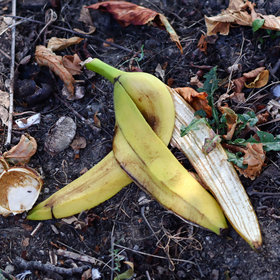 mkgalleryamp; Wine: No Joke: Throwing a Banana Peel on the Ground Isn't a Good Idea... Even in Nature
