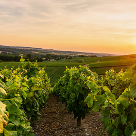 Food & Wine: How Cool Climate Wine Regions Are Dealing with Climate Change