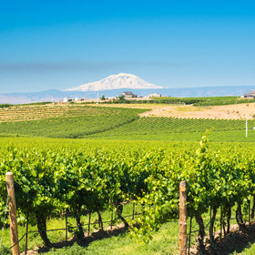 Food & Wine: Washington Has Over 1,000 Wineries, and It's Just Getting Started