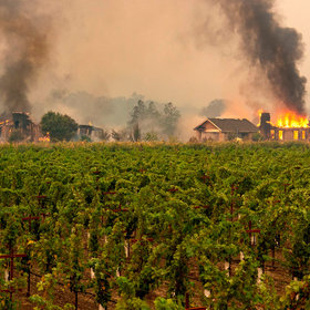 Food & Wine: Wineries Forced to Close and Evacuate Workers as Wildfire Hits Sonoma