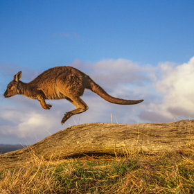 Food & Wine: Goes to Kangaroo Island Once, Writes a Story About It