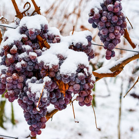 Food & Wine: The Best Places to Taste Wine and Get Cozy in Niagra