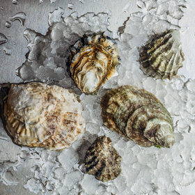 Food & Wine: How to Talk About Oysters Like You Know What You're Talking About