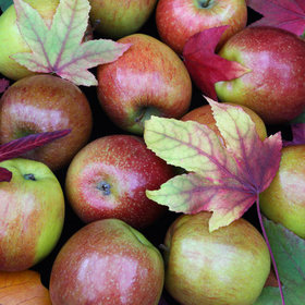Food & Wine: A Brief History of Your Favorite Apples