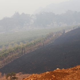 Food & Wine: How California's Wildfires Are Affecting the Wine Market