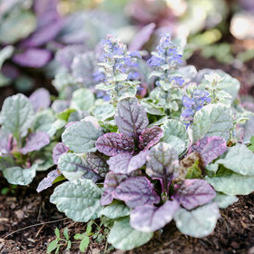 Food & Wine: 15 Impossible-to-Kill Outdoor Plants