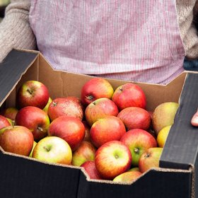 Food & Wine: Your Fresh Apples Are Probably a Year Old