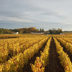 Food & Wine: Bordeaux, the Other White Wine