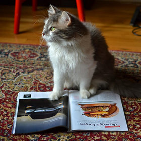 Food & Wine: Cats Are Quite Concerned About Nutrition