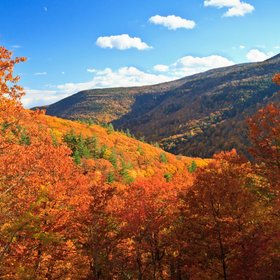 Food & Wine: Here's Where to Grab a Drink After Leaf-Peeping in the Catskills