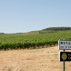 mkgalleryamp; Wine: This Luxury Champagne Tour Is the Ultimate Bucket List Trip for People Who Love Bubbly