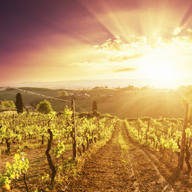 Food & Wine: A Hot Future for Burgundy and Bordeaux