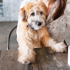Food & Wine: New York City Is Getting a Dog Café
