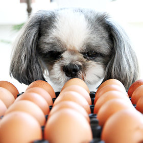 Food & Wine: Viral Egg Challenge Proves Dogs Can Be Man's Gentlest Friend