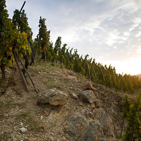 Food & Wine: Great Reds from E. Guigal
