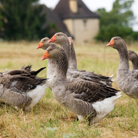 Food & Wine: France Bans Foie Gras for Three Months