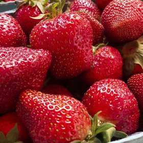 Food & Wine: How to Keep Strawberries Fresh for As Long As Possible