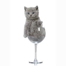 Food & Wine: There's a Wine For Cats Because Humans Shouldn't Have All the Fun