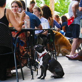 Food & Wine: The Right Way to Bring Your Dog to a Restaurant