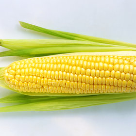 Food & Wine: Corn 101: How to Choose, Store, and Cook Fresh Ears