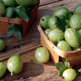 Food & Wine: What Are Gooseberries?