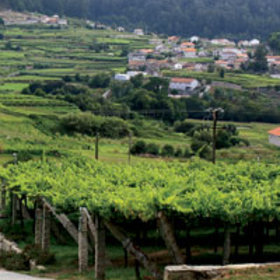 Food & Wine: Is Albariño the Next Great Summer Wine?