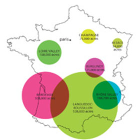 Food & Wine: Things You Need to Know About French Wine