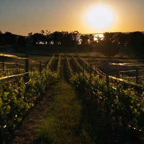 Food & Wine: The Vineyards Around Traverse City, Michigan Are Putting the Midwest on the Wine Map